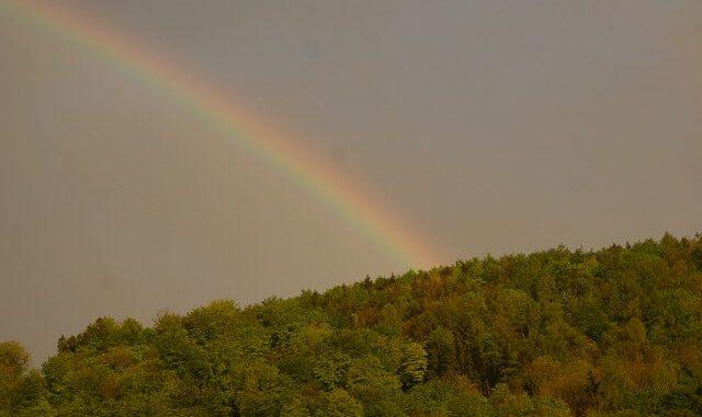 Regenbogen über einem Wald